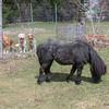 20 4337 Dogs Macaroni Apr 24 2007