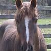23 D0347 Rockadoo 13th B-day Apr 26 2006