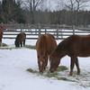 08 1648 Misty Macaroni Sierra Rockadoo  Dec 25 2002