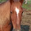05 1216 Sierra Head  Oct 1 2002