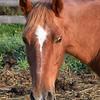 04 1215 Sierra Head  Oct 1 2002