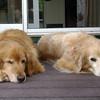 161 wilson et chiens 006 July 13 2013