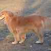 153 DSC_4493 Cassidy Nov 18 2012