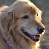 154 DSC_4495 Cassidy Nov 18 2012