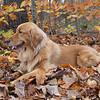 51 089 Cassidy Oct 2007