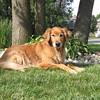 127 dogs calendar 2012 008