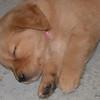 08 4002 Pink Girl Jan 2 2004
