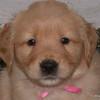 10 4017 Pink Girl Jan 4 2004
