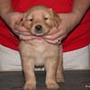 05 3876 Pink Front Dec 27 2003