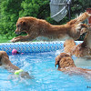 227 DSC_3171 Air Sydney Pool dogs Aug 13 2009