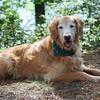 DSC_1517 Boone Sept 10 2012