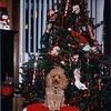 40 Dec 24 1997