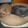 88 IMG_0510 Jan 11 2007