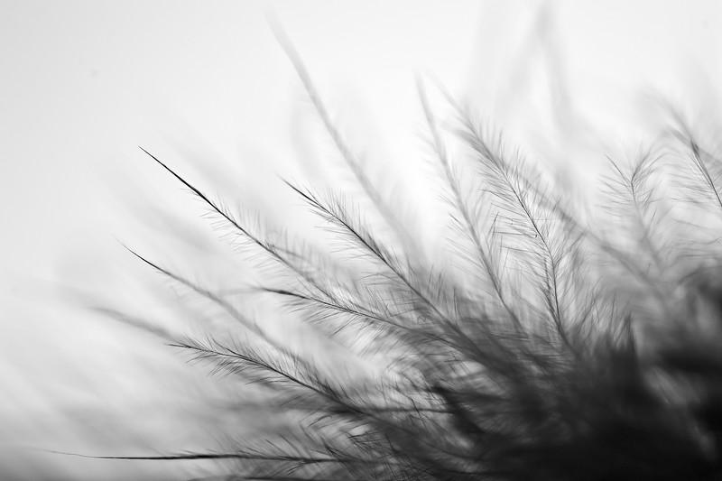 Les mots de Marion - les ailes du désir - Wim Wenders