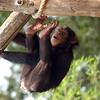 L'oeil du singe - Bernard DIMEY