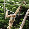 Le singe - Bernard Dimey