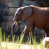 Monsieur et cher éléphant – Romain Gary