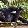 Le singe - Bernard Joyet