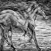 Les chevaux - Allain Leprest