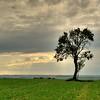 Les arbres - Allain Leprest