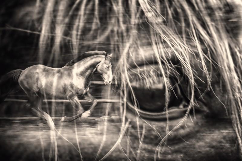 Où vont les chevaux quand ils dorment - Allain Leprest