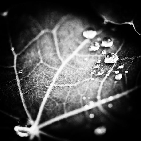 Le noir, un halo, le mystère  - Allain Leprest
