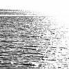 La Méditerranée médite - Allain Leprest