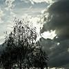 Un arbre - Bernard Joyet