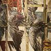 Allain (avec deux ailes) - Nicolas Daquin