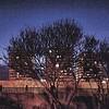 Le moineau - Chat-pitre 7 - (Ivry ma ville N°248, septembre 1995)- Allain Leprest