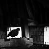 Le moineau - Chat-pitre 2 - (Ivry ma ville N°242, février 1995)- Allain Leprest