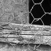 Les grilles - Allain Leprest