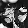 Black and White - Allain Leprest