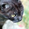 Elle cherche des puces à son chat - Pierre Perret