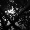 Nocturne - Henri Tachan