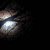 La lune est dans l'arbre - Jean Vasca