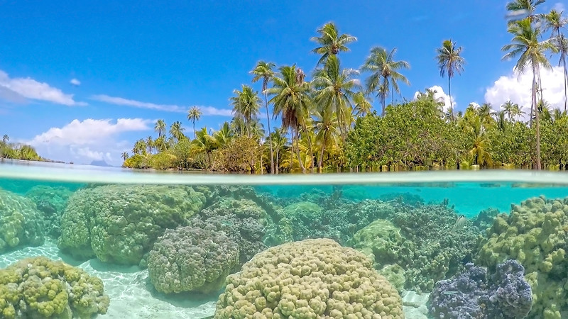 Magical Coral Gardens of Taha'a with Bora Bora watching over