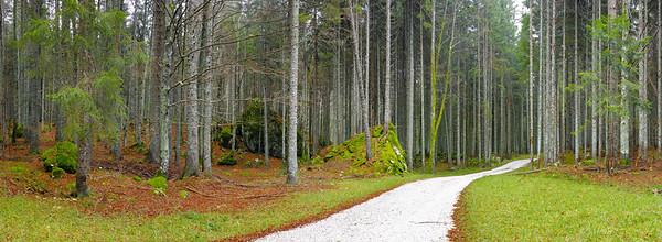 Foresta di Fusine - foto n° 171114-153963
