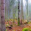 Foresta di Fusine - foto n° 131114-139727
