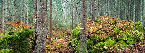 Foresta di Fusine - foto n° 131114-636785 SX