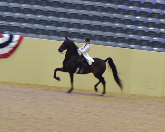 2013 Fall Classic @ Kentucky Horse Park ~ LeMaster Stables