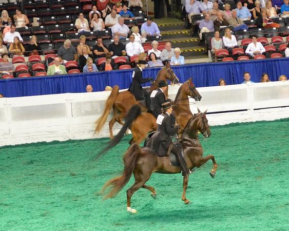 2014 World's Championship Horse Show