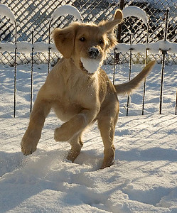 #3, Layla, at about 5 months old, after her first snowstorm.