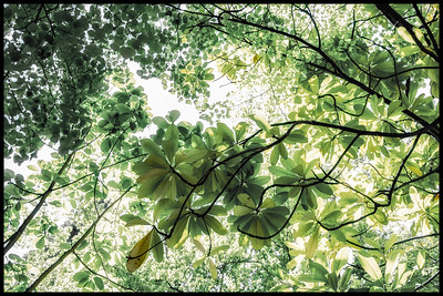 leafy look-ups