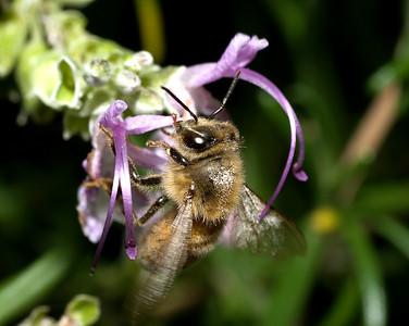 Bee Macros