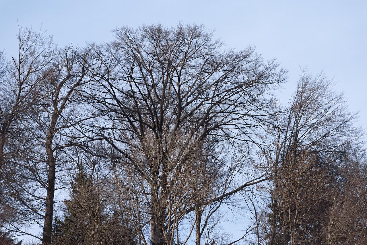 Trees @ 500mm
