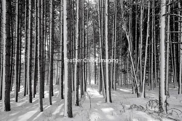 Iona's Woods