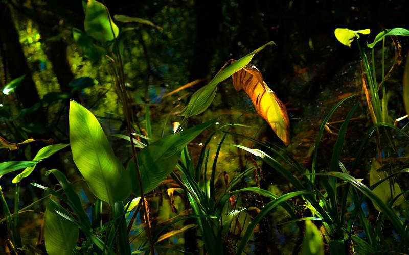 Leavces in the Light-029.jpg