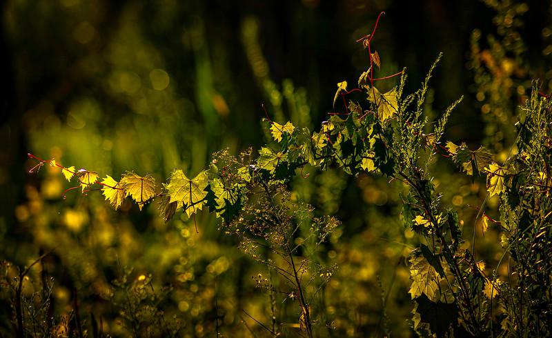 Leaves and Light-119.jpg