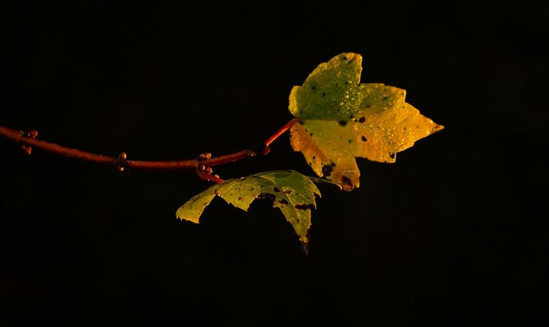 Leaves in the Light-072.jpg